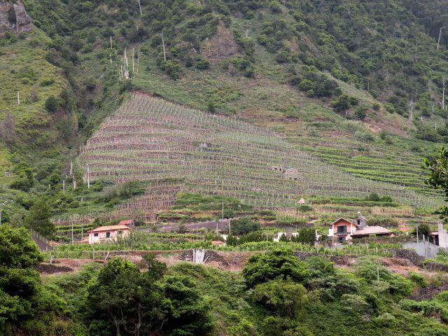 16 Madeira - jama, reka lave - foto