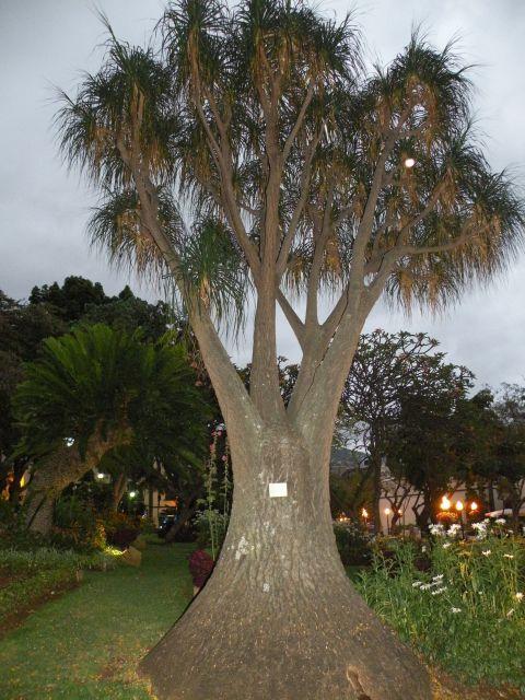 16 Madeira Funshal - foto