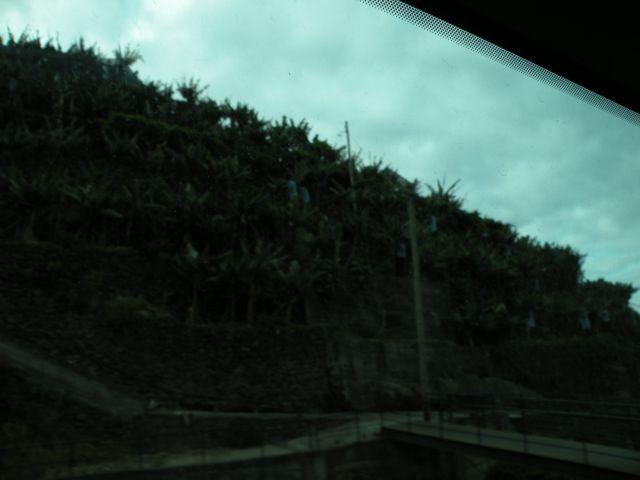 16 madeira, Prezeras - foto