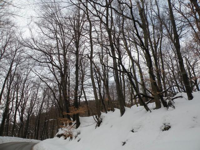 18 NV Konjsko - foto