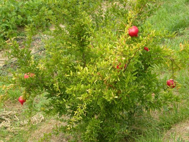 18 hortikultura na kosilo - foto