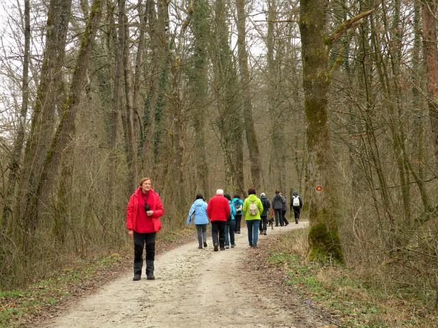 19 Krakovski gozd - foto