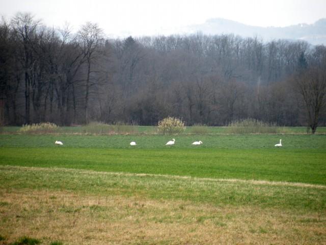 19 Krško polje - foto