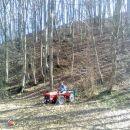 Vlaka drevja pomladi