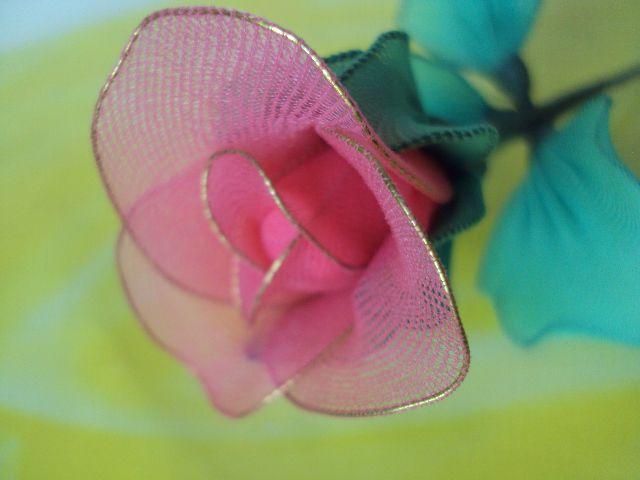 Vrtnica roza - foto