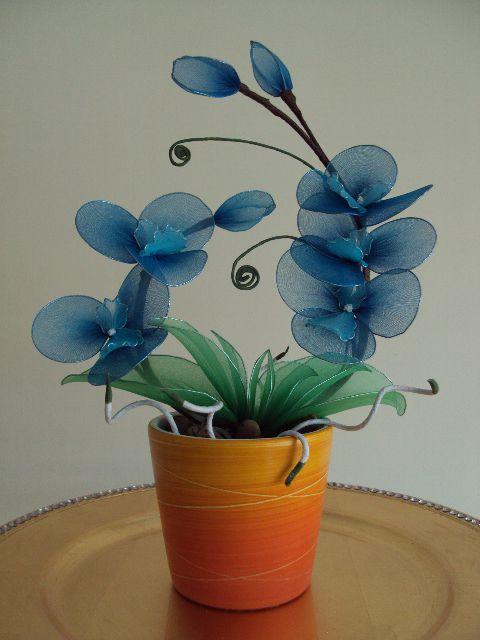 Orhideja modra - foto