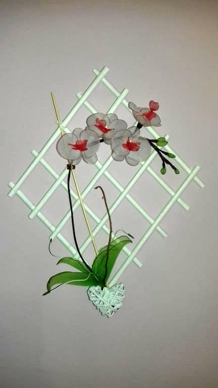 Orhideja rdeče - bela - foto