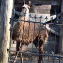 Azilaši na obisku v Zoo Parku Rožman :)