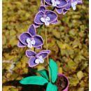 kvačkana orhideja