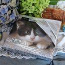 17. Paket mačkastih prtičkov, original zapakirano   IC = 2 eur