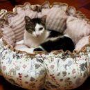 3-1. Mačja posteljica z manekenom