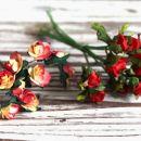 1n. Vrtnice iz papirja   IC = 1 eur