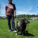Razred zreli psi; Zag, lastnik Igor Skvarč-CAC
