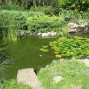 Tak lep ribniček krasi njihovo dvorišče