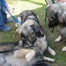 Dona opazuje kaj počneta Kato in Dina
