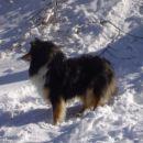 Aisha na snegu