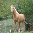 Domingo Lone-Quarter horse žrebec