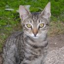 Muri, ko je bil še čist mičken