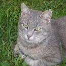 Maca v travi