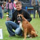 Tempo Vivace Amoteamo - BEST BOXER OF SLOVENIAN BREEDING at Jahressieger Slovenia 2008, V-