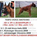 Tempo Vivace Amoteamo - BEST BOXER OF SLOVENIAN BREEDING at Jahressieger Slovenia 2008 & O