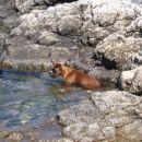 Tempo Vivace Amoteamo - first swim