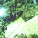Slabo vidna razpoka čez celo dolžino v steklu akvarija s hobotnico