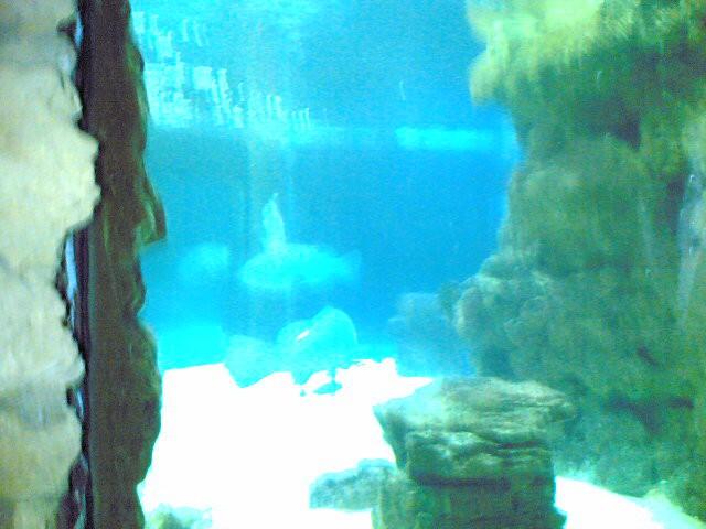 Največji akvarij v Akvariju