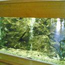 Endemična vrsta rib, ki živi samo na Rodosu