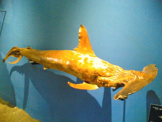 Akvarij na Rodous(2006) - foto