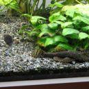 Akvarij 2