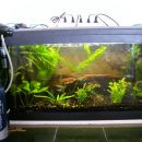 Zadnja slika starega akvarija
