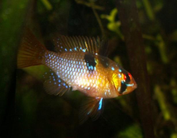 Akvarij Cayman 80 proffessional - foto