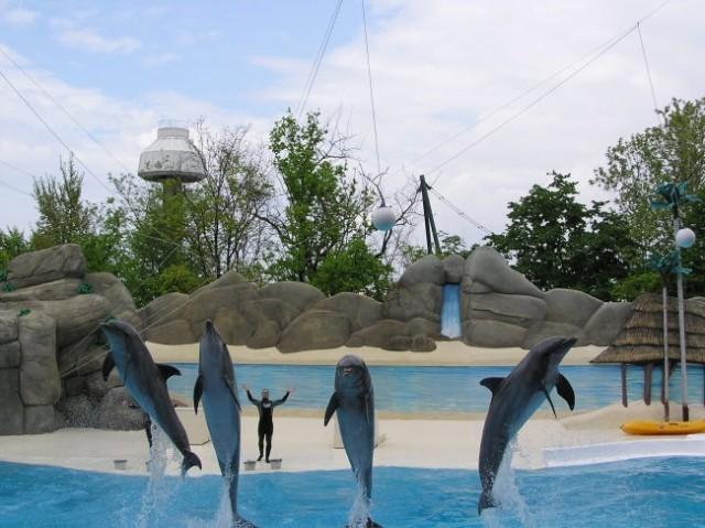 Gardaland delfini