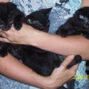 Tri male mucice so ostale sirote, ko je njihovo mamo povozil avto. Stare so približno 2 me