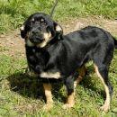 Mala psička, stara 4 mesece, išče nov dom. Ko bo odrasla, bo srednje rasti.  041/666-187