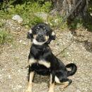 mala psička, stara 4 mesece, 041/666-187   ODDANA