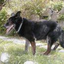Nero - starejši kuža išče posvojitelje, možna je tudi varianta posvojitve na daljavo. 031/