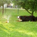 Igranje z vodo...ampak samo od daleč