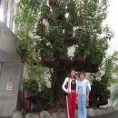 Veliko drevo v posodi