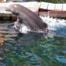 Delfini so tukaj nekaj vsakdanjega