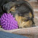 Tisa in njen ježek ;)