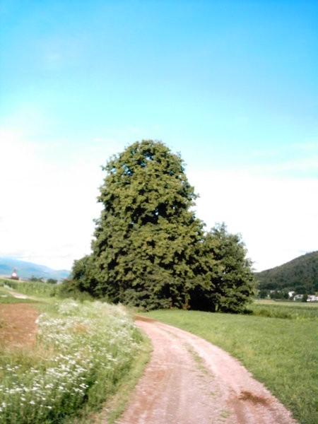Hraše{photo by Šunko} 3 - foto