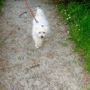 Greeemo na sprehod! :-)