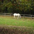 Na poti smo srečali konje.