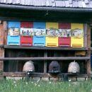 Arboretum -domovanje čebelic