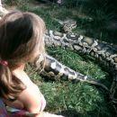 Gibi Gib -obiščejo nas čisto prave kače