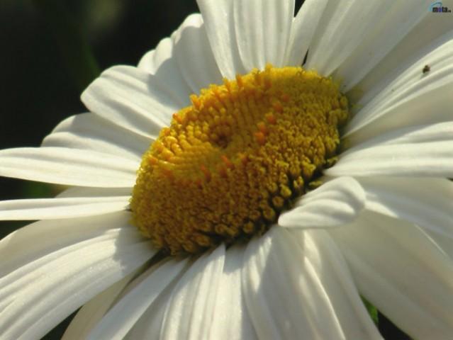 Flowers - foto