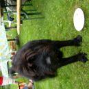 Aron in krožnik brez torte :))
