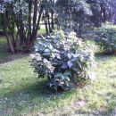Obisk v botaničnem vrtu